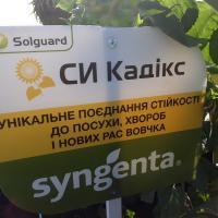 Подсолнечник СИ Кадикс купить семена