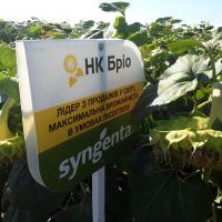 Соняшник НК Бріо купити насіння