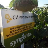 Соняшник СІ Фламенко купити насіння