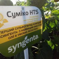 Семена Подсолнечника Сумико от Агроэксперт-Трейд
