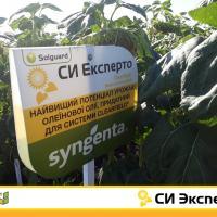 Подсолнечник СИ Эксперто купить семена