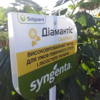 Соняшник СІ Діамантіс купити насіння