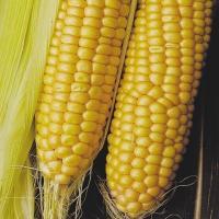кукурудза гібрид ДКС 3711 насіння