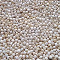 Сорго гибрид 400Х36 купить семена