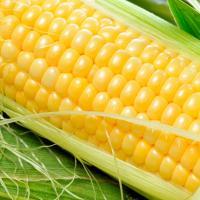 кукурудза гібрид СІ Феномен купити насіння