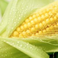 кукуруза гибрид ДКС 3507 семена