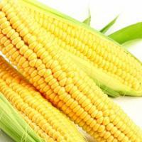кукурудза гібрид ДКС 3795 насіння
