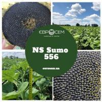 Семена Подсолнечника НС Сумо 556 от Агроэксперт-Трейд