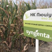 кукуруза гибрид НК Люциус купить семена