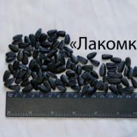 Посівний соняшник соняшник насіння сорт Лакомка опис характеристика ціна купити в Україні