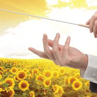 Соняшник Опера ПР купити насіння