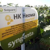 Соняшник НК Неома купити насіння
