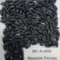 Подсолнечник гибрид НС Х 6042 купить семена
