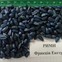 Соняшник гібрид Рімі купити насіння