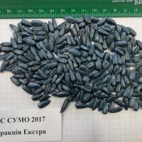 Подсолнечник гибрид Сумо 2017 купить семена