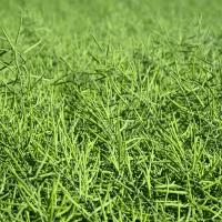 Семена рапса ПР44В22 купить в Украине, описание гибрида, отзывы, цена, доставка