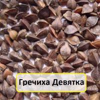Семена гречихи сорт Девятка
