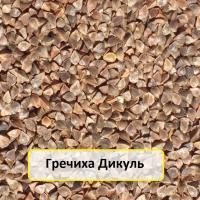 Семена гречихи сорт Дикуль