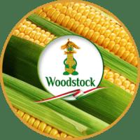 насіння кукурудзи угорської селекції Вудсток