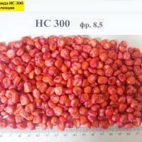 насіння сербської кукурудзи