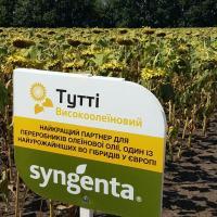 Соняшник Тутті купити насіння