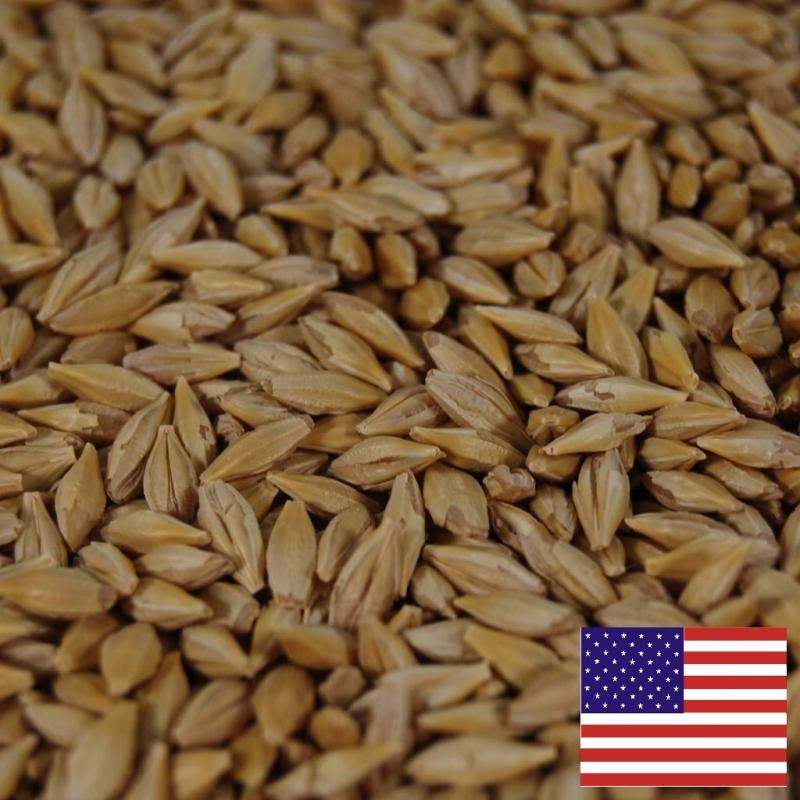 семена американского ячменя