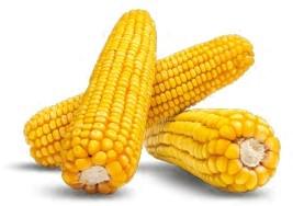 Гибрид кукурузы Аурум купить в Украине