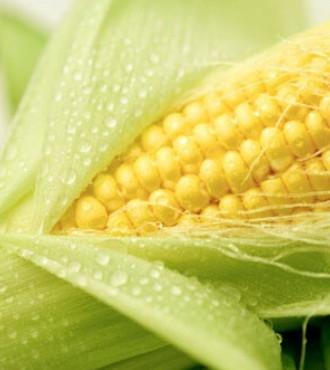 кукурудза гібрид ДКС 3507 насіння