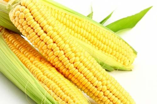 кукуруза гибрид ДКС 3795 семена