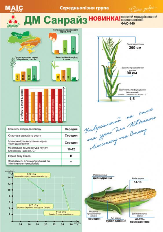 Гибрид кукурузы ДМ Санрайз описание