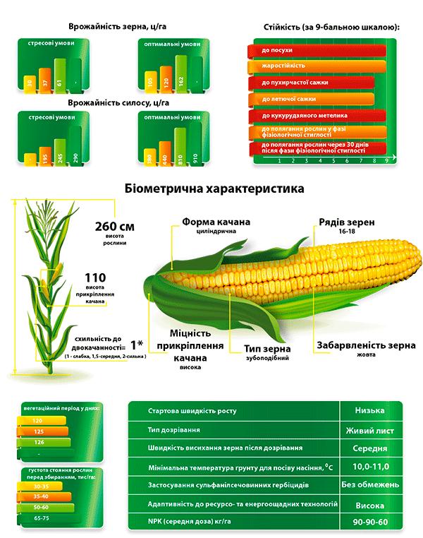 Гібрид кукурудзи ДМ Конфес опис