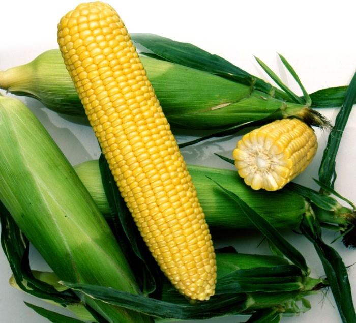 Гибрид кукурузы ДМС 3908 купить в Украине