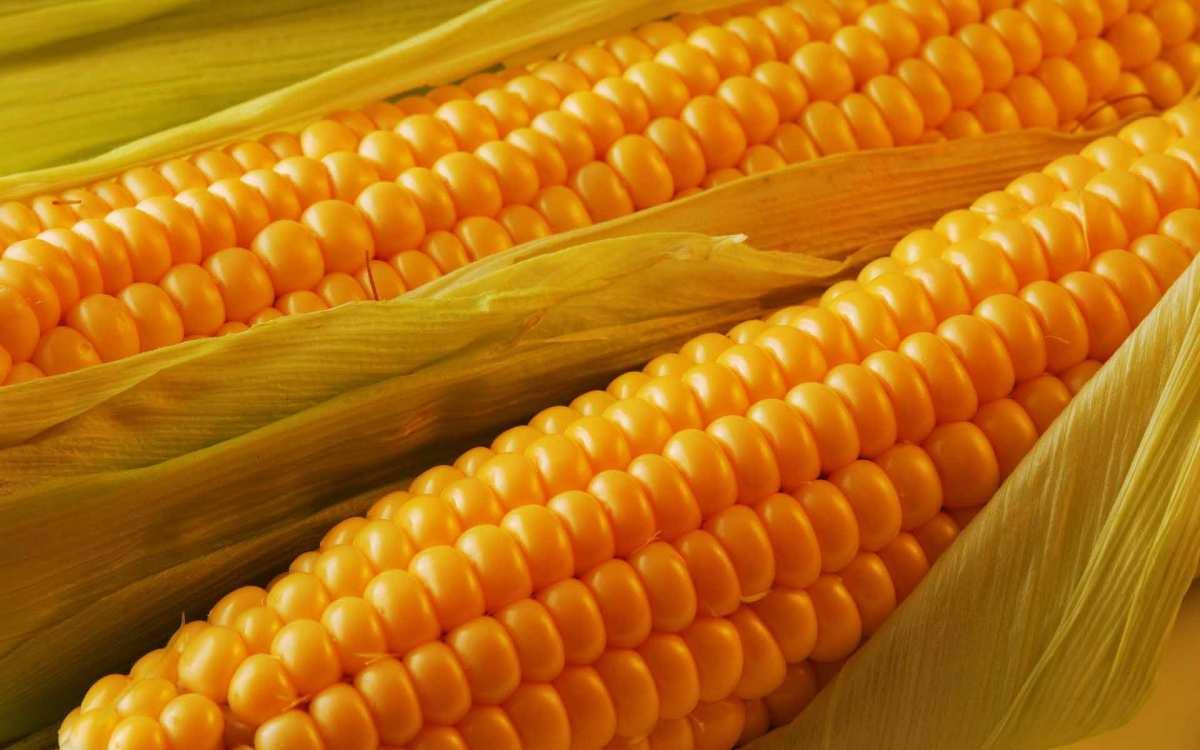Картинки по запросу кукурудза