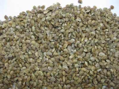 семена эспарцета купить Украина
