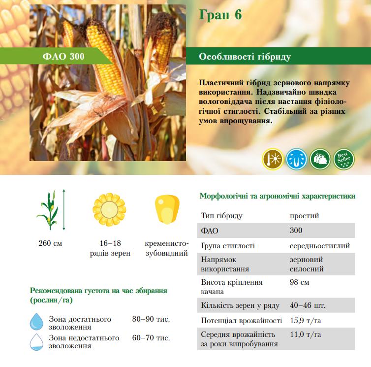 Гибрид кукурузы Гран 6 характеристика