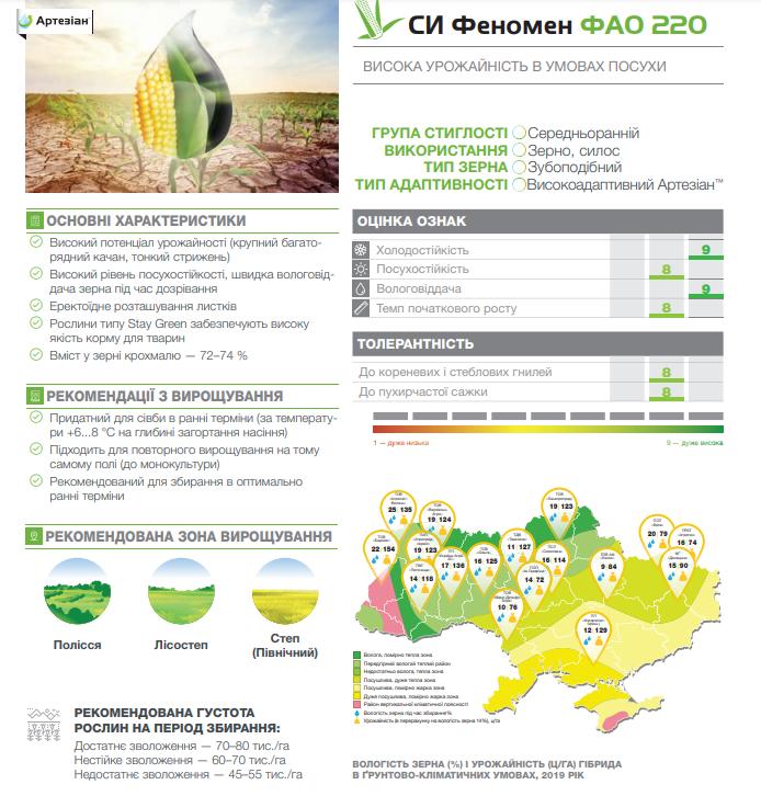 Гибрид кукурузы СИ Феномен описание
