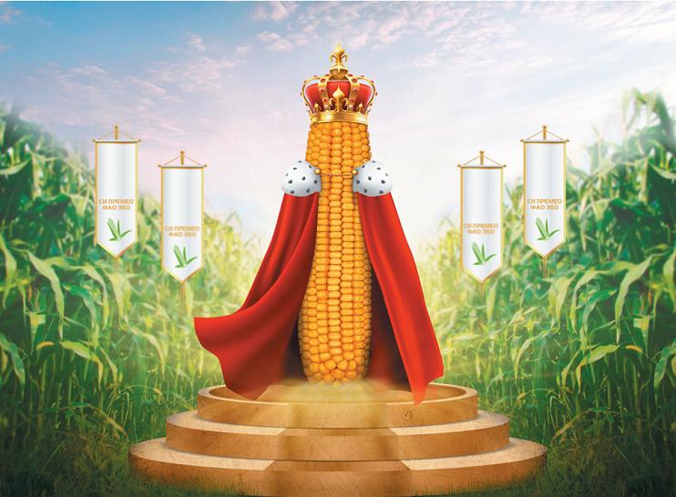 кукуруза гибрид СИ Премео фото