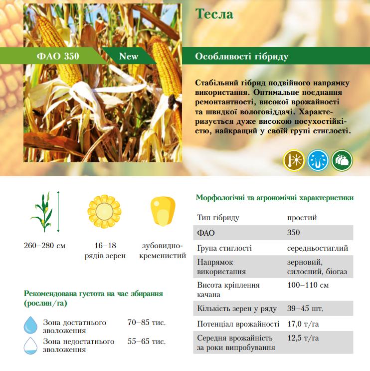 Гибрид кукурузы Тесла характеристика