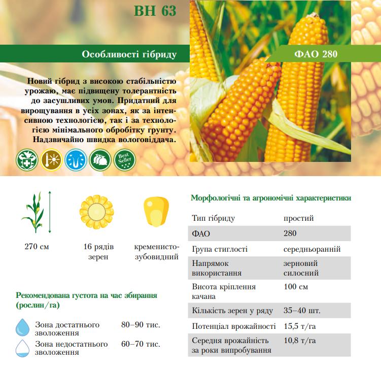 Гибрид кукурузы ВН 63 характеристика