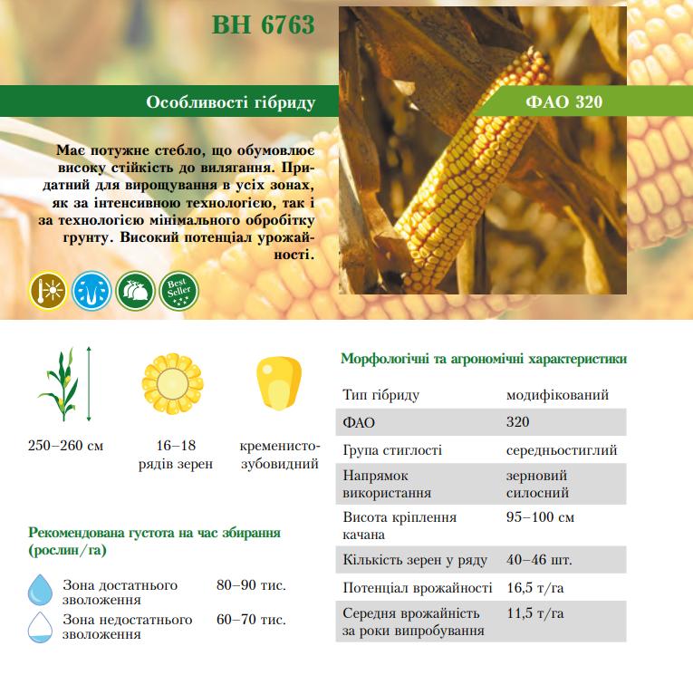 Гибрид кукурузы ВН 6763 характеристика
