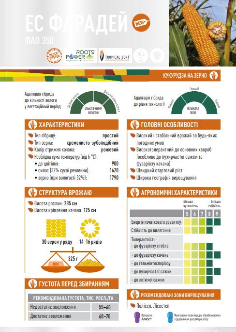Гібрид кукурудзи ЄС Фарадей опис