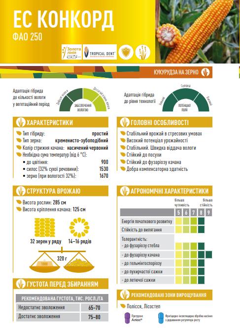 Гибрид кукурузы ЕС Конкорд описание