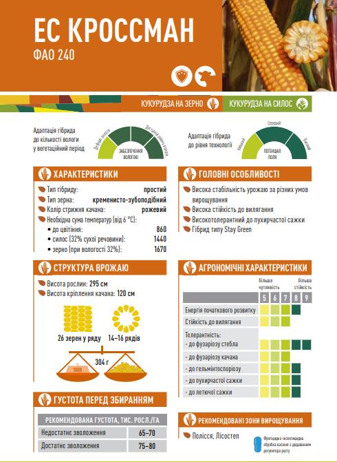 Гибрид кукурузы ЕС Кроссман описание