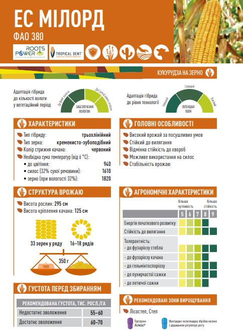 Гібрид кукурудзи ЄС Мілорд опис