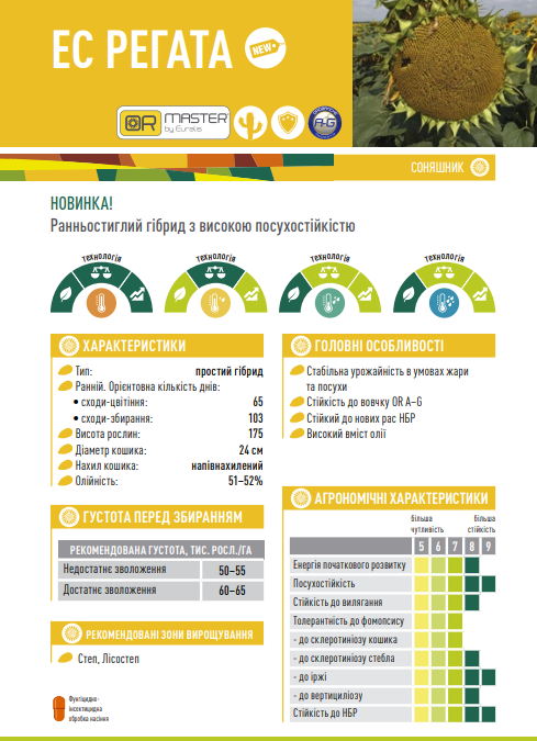 Гибрид подсолнечника ЕС Регата описание