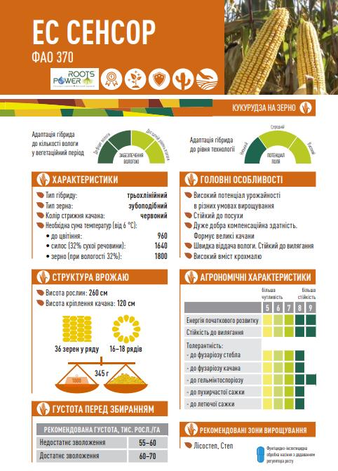Гібрид кукурудзи ЄС Сенсор опис