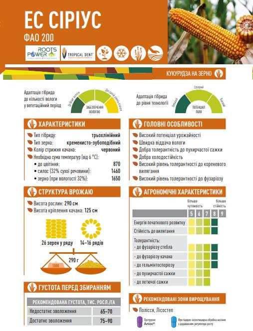 Гибрид кукурузы ЕС Сириус описание