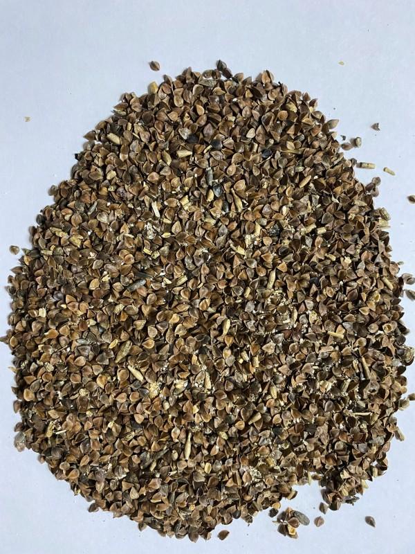 Семена гречихи на сидерат семена