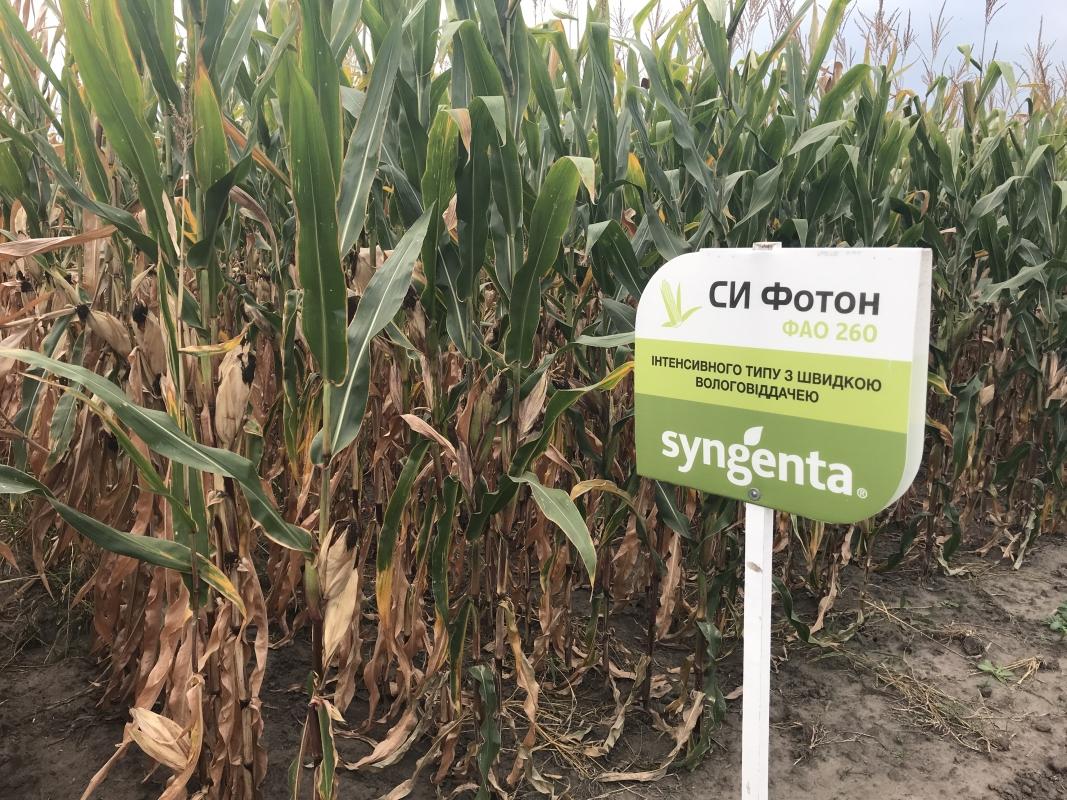 кукуруза гибрид СИ ФОТОН в Украине