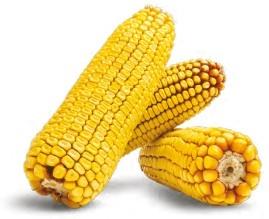 Гибрид кукурузы Марсер купить в Украине